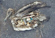 Stomach Contents of Seabirds Show that Marine Plastic Pollution Is out of Control