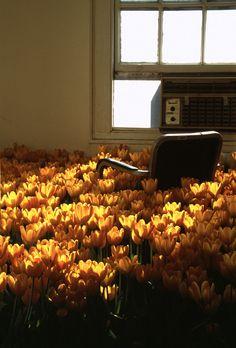 Abandoned Asylum full of Flowers.  Via Nerdcore