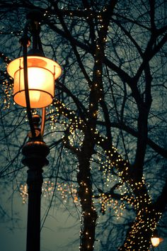 beautiful lamp post and tree lights