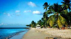 Njut av Tobagos vackra korallrev | Trinidad & Tobago | Karibien | Resmål | Resa | Aftonbladet