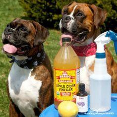 6 Maneras de prevenir y deshacerse naturalmente de las pulgas en perros.