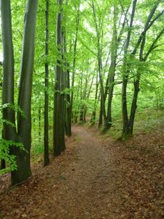 Thüringer Wald, Thuringia, Germany Thru Hiking, Hiking Gear, Jena, Forests, Rivers, Paths, Woods, Trail, Amazing