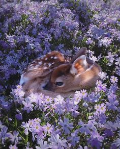 baby deer resting in purple flowers Baby Animals Super Cute, Cute Little Animals, Cute Funny Animals, Cute Dogs, Cute Babies, Baby Animals Pictures, Cute Animal Pictures, Nature Animals, Animals And Pets