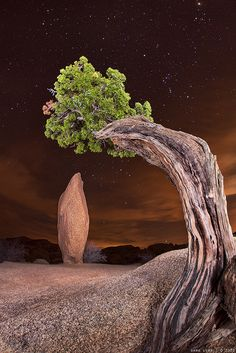 Jumbo Rock, Joshua Tree National Park, CA./You can almost hear the silence and feel the magic!
