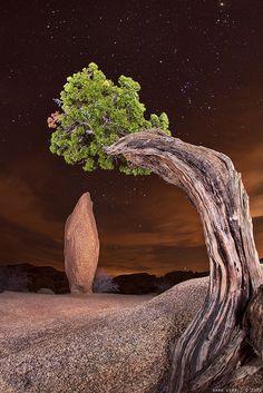 Jumbo Rock  – #Joshua Tree National Park, CA.