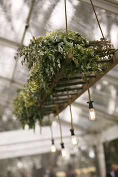 Modern hanging installation with an abundance of foliage on rustic ladder with exposed pendant lights.