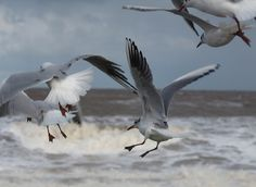 Seagulls at Hornsea Beach by Tom Wood East Yorkshire, Wood, Beach, Animals, Animales, Woodwind Instrument, Animaux, Seaside, Trees