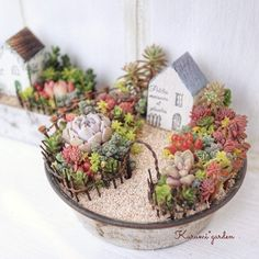 Succulents and home Succulent Landscaping, Succulent Gardening, Garden Terrarium, Succulent Terrarium, Succulent Arrangements, Cacti And Succulents, Planting Succulents, Planting Flowers, Mini Cactus Garden
