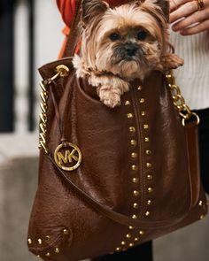 haha, so lovely the dog stand in the Michael Kors bag http://www.michaelkorsonlinewholesale.com/Michael-Kors-Logo-Print-Medium-Coffee-Totes-p-1900.html