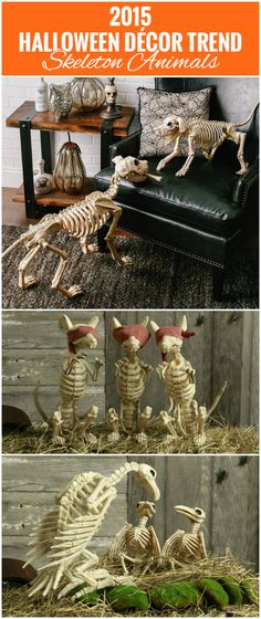 Animal skeletons are one of the coolest trends for 2015 Halloween decor. Plus, they can be used inside OR outside!