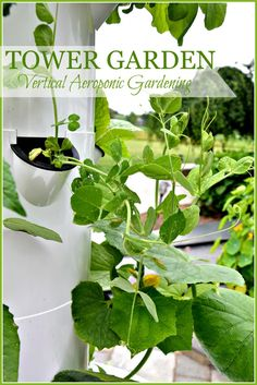 TOWER GARDENING... FUN, NUTRITIONAL AND DELICIOUS! - StoneGable