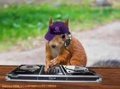Squirrels of Wisdom