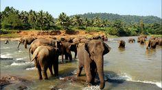 Новогоднее путешествие на Шри-Ланку
