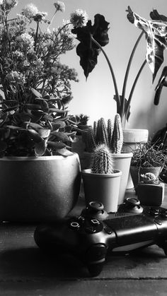 #playstation4 and #succulents #ps4 #cactus #brighton #kemptown #blackandwhite