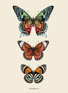'Antique Tropical Butterflies I' Fine Art Print Butterfly Drawing, Butterfly Wallpaper, Witchy Wallpaper, Scientific Drawing, Nature Posters, Alien Art, Hand Illustration, Artist Art, Wall Collage