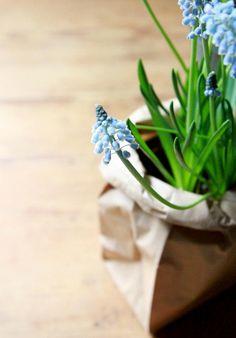 plastic pot, disguised | gardenista