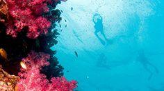 Tutkaile merenalaista elämää Khao Lakissa. #KhaoLak #Thaimaa #Thailand Khao Lak