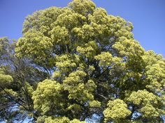 wilbur smith the sound of thunder wattle trees