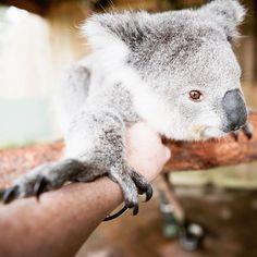 4,296 vind-ik-leuks, 37 reacties - Lauren Bath | Australia (@laurenepbath) op Instagram: 'The other day we drove straight past Symbio Wildlife Park to photograph a waterfall and Jewels and…'