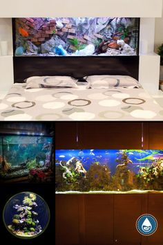 Celebrities are icons of fashion and trends. Here is a list of 9 celebrities who have fun and unusual fish tanks. Maybe their unique designs will inspire you to add an aquarium as one of the decorations in your living room. You can put them in walls and they can be the centerpiece of your interior design plan. These celebrity fish tanks should give you some great ideas. #celebrityfishtank #fishtank #fish Cool Fish Tanks, Aquarium Design, Have Fun, Centerpieces, Walls, Celebrity, Design Ideas, Icons, Inspire