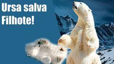Emocionante: Mãe urso salva filhote