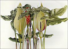 Pandora Sellars. born 1936, England