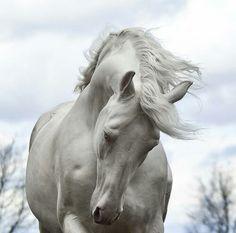 Daenerys' Silver