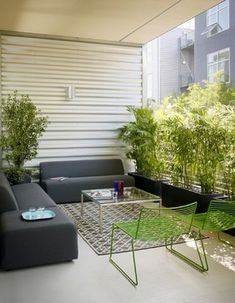 A simple row of planters filled with verdant palms screens the view of neighboring buildings.