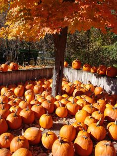 oh the pumkins