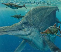 Shonisaurus, Late Triassic (215 Ma), Discovered by Camp - 1976;  Californosaurus (surrounding ichthyosaurs), Triassic (228-210 Ma), Discovered by Kuhn - 1934