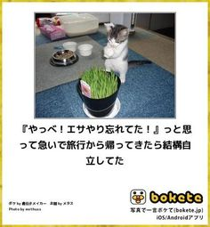 画像 Kittens, Cats, Funny Pictures, Puppies, Cute Kittens, Fanny Pics, Gatos, Cubs, Funny Pics