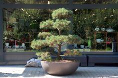 Modern Planter Pots   Stardust Modern Design