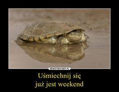 Weekend :)