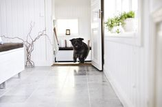 Pets love soapstone too! These soapstone tiles do not absorb water and are not slippery, even when wet. Travertine Floors, Granite Flooring, Terrazzo Flooring, Linoleum Flooring, Timber Flooring, Vinyl Flooring, Garage Flooring, Kitchen Flooring, Soft Flooring