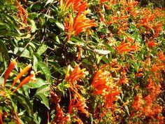 aula 2 - foto 08 - Jardim Botânico de Brasília - ênfase nas cores e texturas da natureza