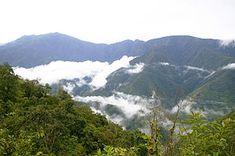 Los Yungas (Bolivia) Los Yungas es una región geográfica de Bolivia ubicada en el departamento de La Paz, al noreste de la ciudad de La Paz. El WWF la considera una ecorregión denominada Yungas bolivianos que se extiende también a los departamentos de Cochabamba y Santa Cruz.