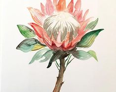 Your place to buy and sell all things handmade Watercolor Print, Watercolor Paintings, King Protea, Artsy Fartsy, Flower Art, Journaling, Canvas Art, Doodles, Tropical