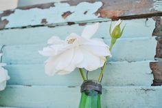 Iceberg roses, white roses on aqua shutter