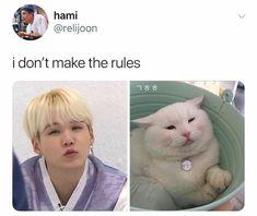 Told yah that Yoongi is a kitten Bts Memes, Funny Memes, Hilarious, Bts Suga, Min Yoongi Bts, Foto Bts, K Pop, Daegu, Famous Meme