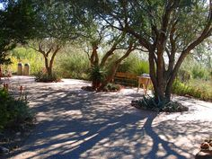 Mesquite trees at the Arizona - Sonora Desert Museum. Tree ring, river rock and dog friendly / low water plants.