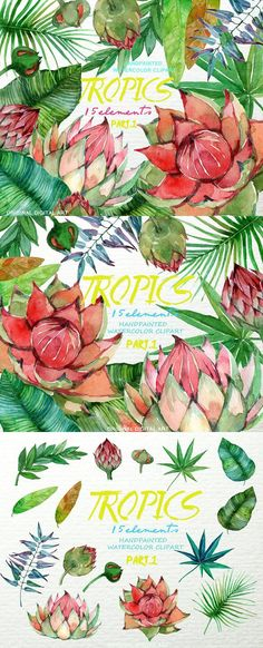 Exotic Watercolor Floral Clip Art. Watercolor Flowers