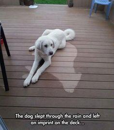 the dog slept through the rain