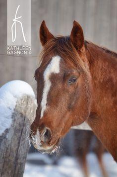 Péponita Léo Jessie-Quater Horse- propriétaire moi Kathleen Gagnon