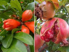 Vegetables, Garden, Plants, Garten, Lawn And Garden, Vegetable Recipes, Gardens, Plant, Gardening