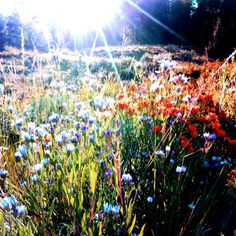 Sunshine on a mountain meadow, iPhoneography