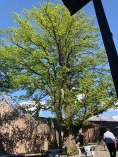Mittagessen genießen und gleichzeitig einen kühlen Kopf bewahren.  Telefon: +41 (0)81 723 14 88, E-Mail: schloss.sargans@gmx.ch . . . . #SchlossSargans #Sommer #Sommerferien #lunchmenu #Lunch #auszeit #wanderwege #wanderlust #essenundwandern #Lunchtip #wandertip #Swissgastro #finefood #tablefortwo #naturelover #treetime #Swissrestaurant #Schweiz #Feiern #genuss #Hochzeit #swisscastle #schlossgarten Lunch Menu, Restaurant, Wanderlust, Plants, Hiking Trails, Time Out, Switzerland, Eat Lunch, Summer