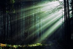 Light in the forest...