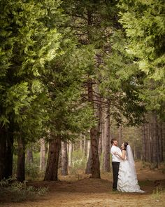 forest photography weddings - Google Search