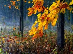 Autumn Colors Photo by   REgiNA -- National Geographic Your Shot