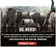 Be Herd!